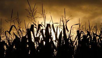Perspectivas nada alentadoras para el maíz en Chicago