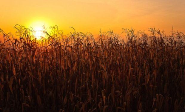 En el último día del Farm Journal Midwest Crop Tour el mercado espera expectante los resultados nacionales que se darán a conocer en breve.