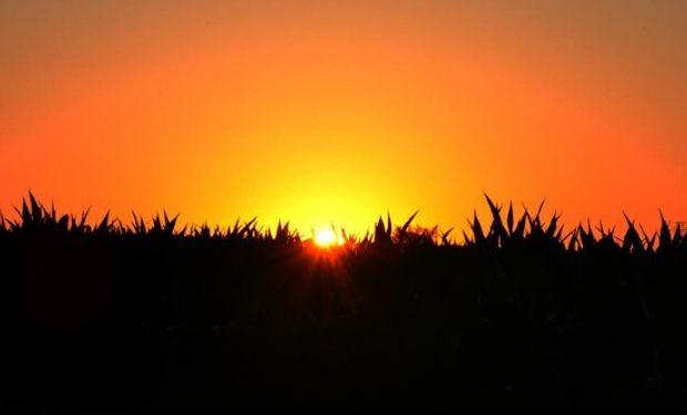 El pronóstico ahora le juega en contra a los commodities agrícolas.