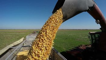 ¿Qué implica un incremento en la transformación de maíz?