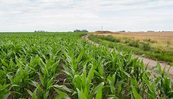 """""""Cultivos resilientes"""": buscan medir el aporte de los bioestimulantes sobre maíces con estrés hídrico y calórico"""