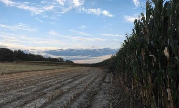 Cómo hacen maíz en el corazón del corn belt.