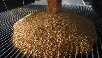 Chicago: fondos siguen liquidando posiciones en maíz