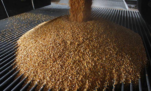 Fondos siguen liquidando posiciones en maíz.