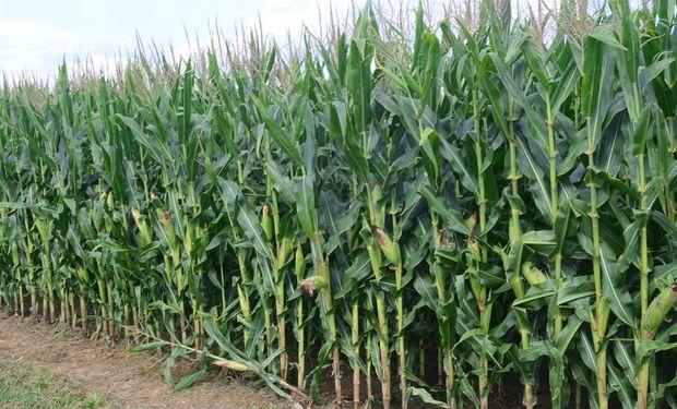 Lote de maíz en Iowa, Estados Unidos.