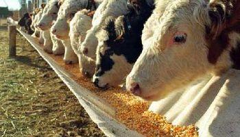 Cambio rotundo en los márgenes del negocio ganadero