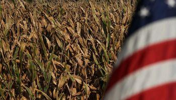 Oferta y demanda: los datos destacados del USDA para soja, trigo y maíz