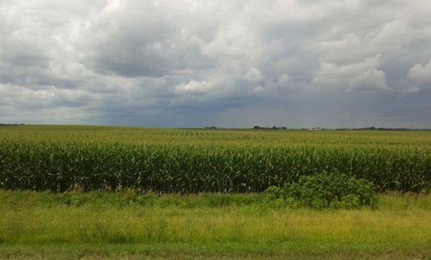 Maíz en Des Moines, Iowa,  principal estado de producción del forrajero en Estados Unidos.