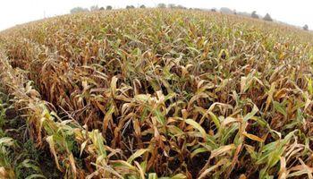 Mínimo de 17 meses para el precio de los alimentos: qué anticipa la FAO para la campaña 2020/21