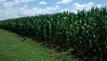 AgroActiva: lluvias de los últimos días favorecieron el desarrollo de los cultivos
