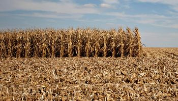 NOA: flete representa un tercio del precio del maíz