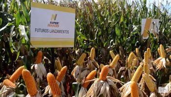 Un maíz todo terreno ahora va por más