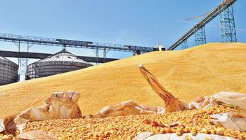 Brasil podría importar maíz argentino