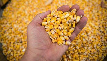 Biocombustibles: preocupa en la principal provincia productora de maíz la demora en la prórroga de la Ley actual
