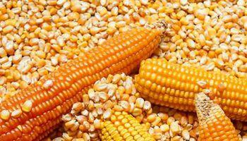 El maíz se llevó la atención en Rosario, con importantes subas en el mercado disponible