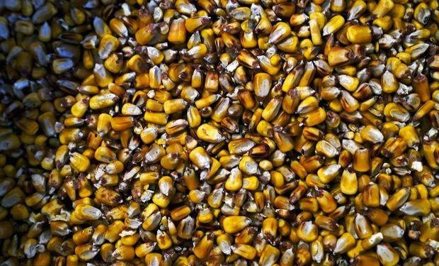 Soja, trigo y maíz: el mercado de granos no logra recuperarse de las fuertes pérdidas