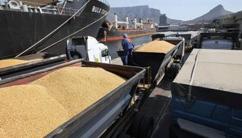 México busca importar maíz argentino