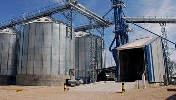 El Senasa interviene el mercado de maíz pisingallo