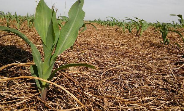 Mejoró el poder de compra de la soja y el maíz: ¿Oportunidad para fijar el costo de los insumos?