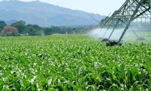 En Río Cuarto, el maíz dará electricidad