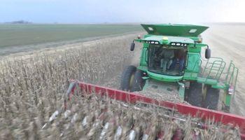 San Luis: prohíben la producción de semillas de maíz