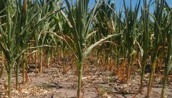 La sequía alcanzaría un punto del PBI argentino