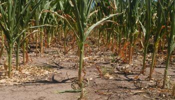 """""""Provincias evalúan declarar la emergencia agropecuaria por la sequía"""""""