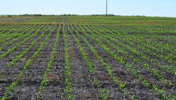 Humedad óptima para el maíz en zona núcleo