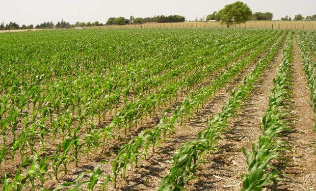 El avance de siembra cubrió a la fecha el 19,8 % del área. Fuente: BCBA.