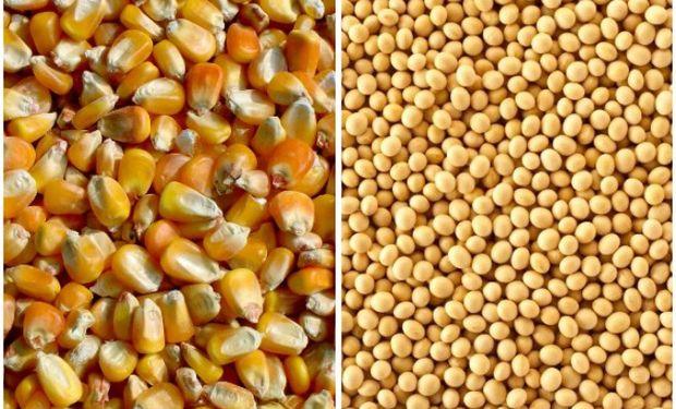 Mercado de granos: la soja, el maíz y sus circunstancias.