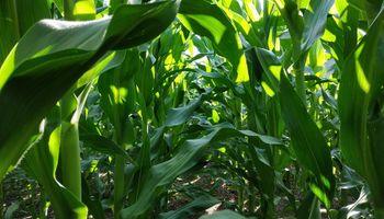 Genética y agronomía fueron protagonistas en AAPRESID
