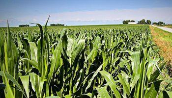 Zona núcleo: maíz espera en la largada de la siembra