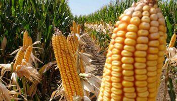 Claves del negocio agrícola