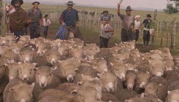 Baja del petróleo sin efecto sobre carne ovina