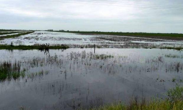 La persistencia del agua en la superficie de los lotes, en algunas zonas del sudeste de Córdoba, impidió ingresar con las sembradoras.