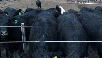 """Detectan un caso de """"mal de la vaca loca"""" en Estados Unidos"""