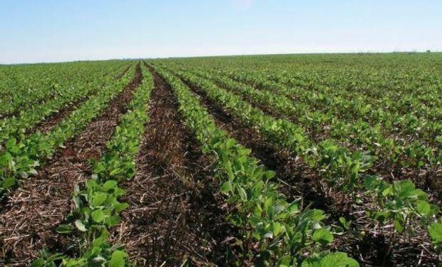 Made in Argentina: lanzan un nuevo herbicida de amplio espectro y con poder residual