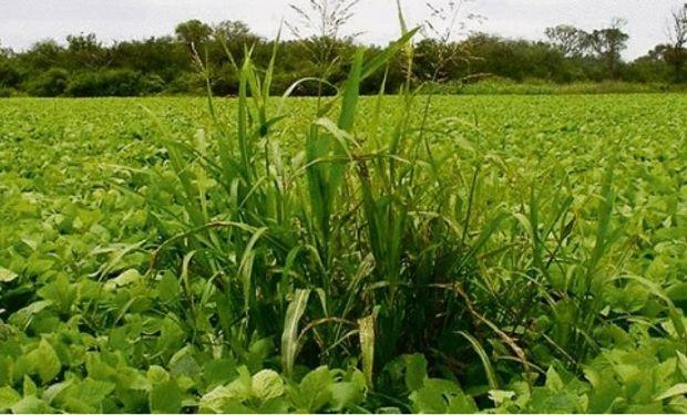 Destacan al país por el control de plagas vegetales