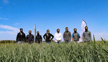 En plena pandemia, consejos de manejo para trigo y cebada: estrenan recorrida virtual por ensayos a campo