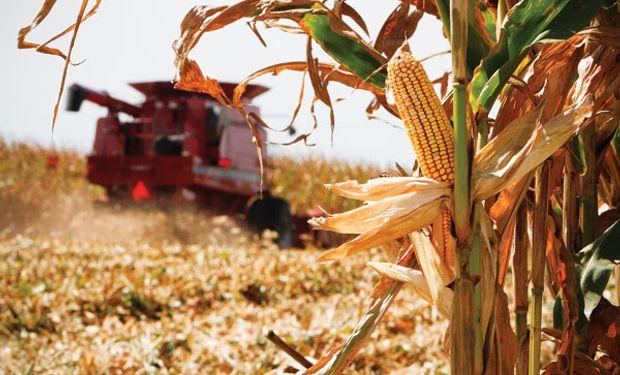 Manejo de nutrientes: Fósforo en la Cuenca del Salado
