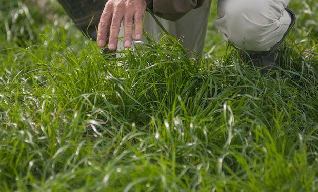 Pasturas y verdeos: por qué hablamos de fertilización nitrogenada