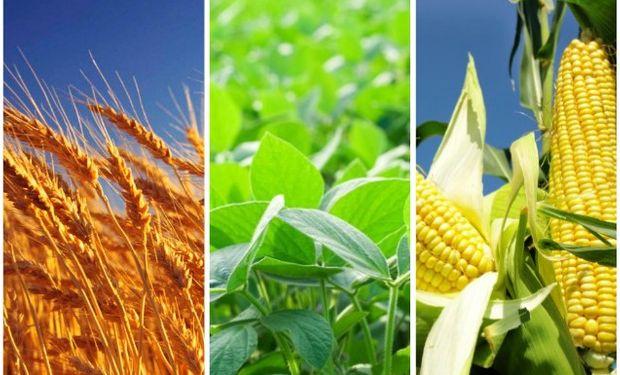 Mirá las claves para el manejo de plagas en soja, trigo y maíz.