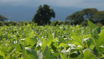 Soja: manejo del cultivo en un año Niño