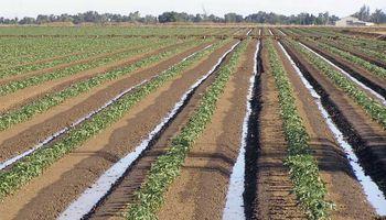 Manejo de suelos en sistemas agrícolas de alta producción