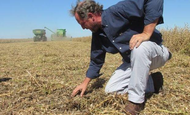 Martín Ambrogio evalúa las pérdidas de cosecha en soja, la última campaña.