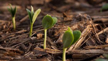 ¿Cómo manejar la soja frente al cambio climático?