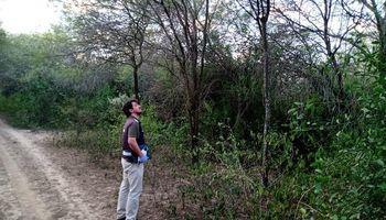 Qué se sabe de la invasión de langostas de Paraguay que afecta al norte argentino
