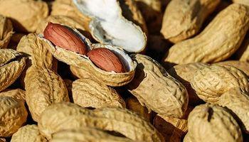 Crearon una semilla resistente a la enfermedad que ataca al maní
