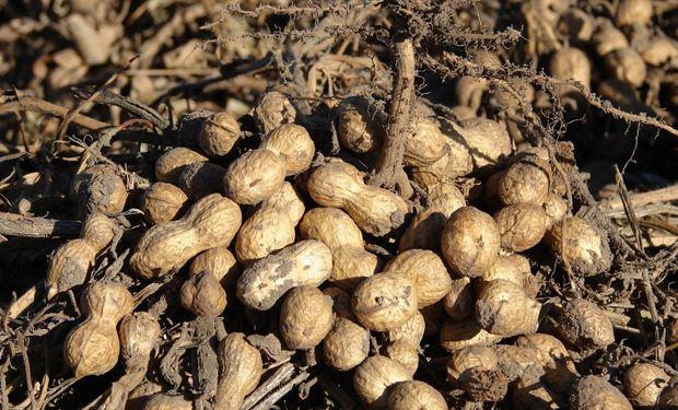 En Córdoba, la cosecha avanzó sobre el 30% del área sembrada, contra el 66% alcanzado a igual fecha de 2015.