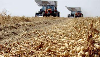 Córdoba logró el récord histórico de exportaciones de maní